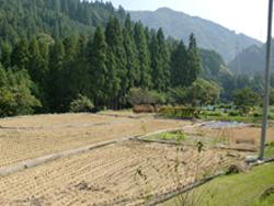 農作業の話